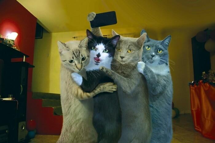 Кошки приколы видео смотреть бесплатно подряд