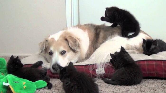 Кошки против собак приколы видео