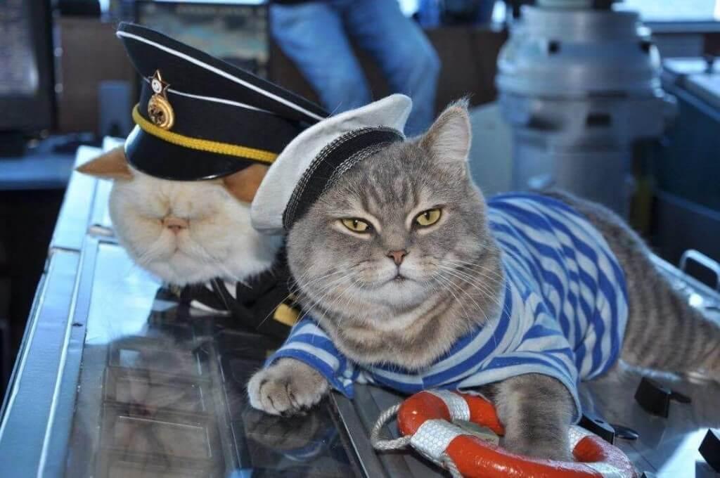 Коты приколы новые видео