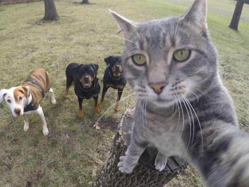 Подборка приколов с кошками видео