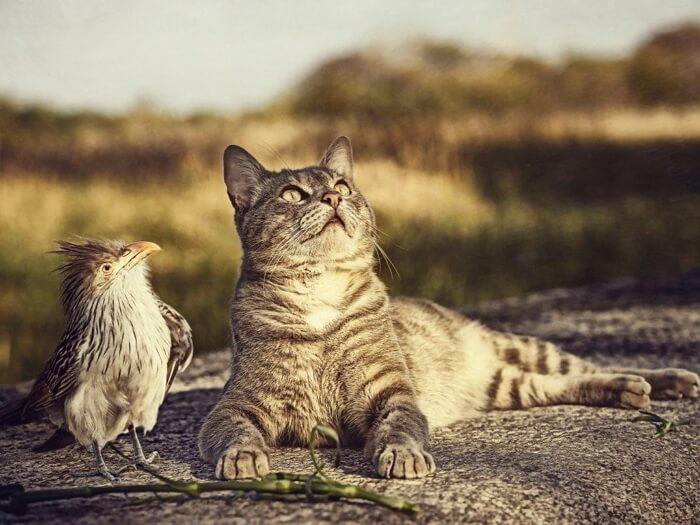 Приколы про котиков самые смешные видео