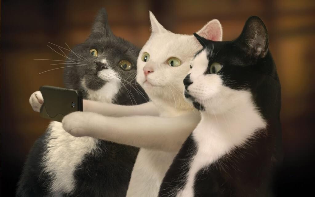 Приколы про котов самое смешное видео
