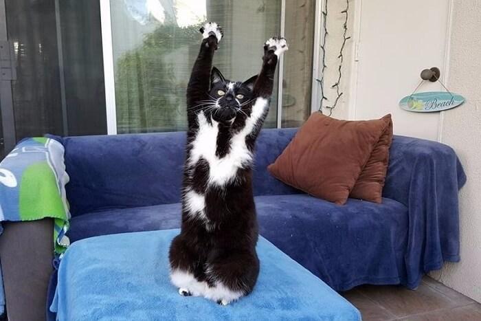 Приколы с котами до слез видео