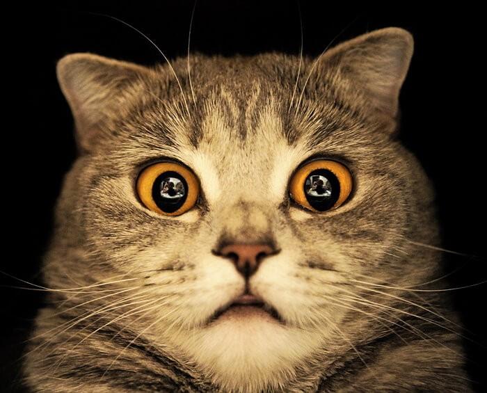Приколы с котиками самое смешное видео смотреть