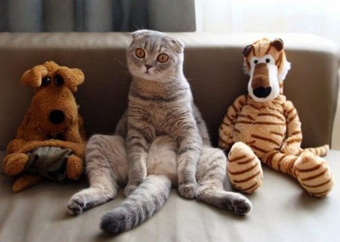 Смотреть видео приколы над котами