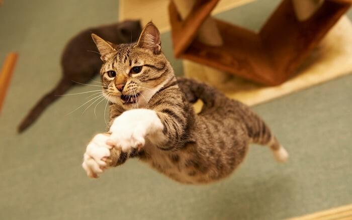 Смотреть видео приколы с котами до слез