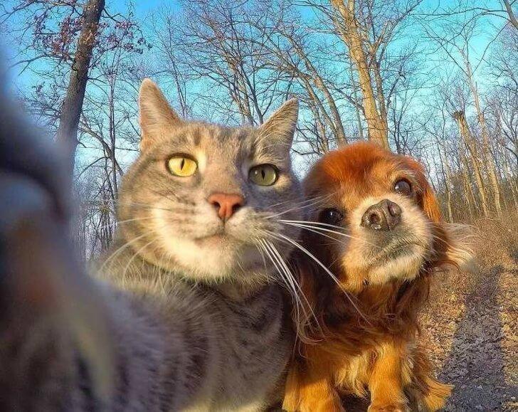 Видео приколы про котов