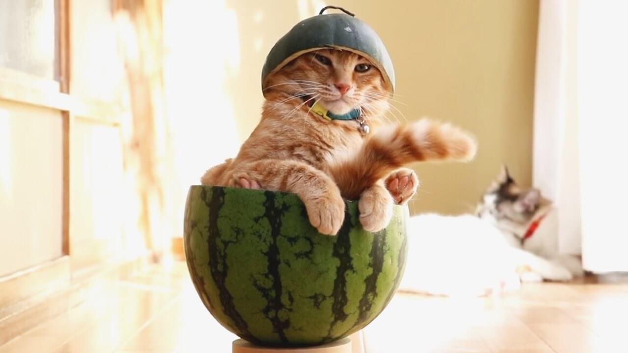 Видео приколы про котят