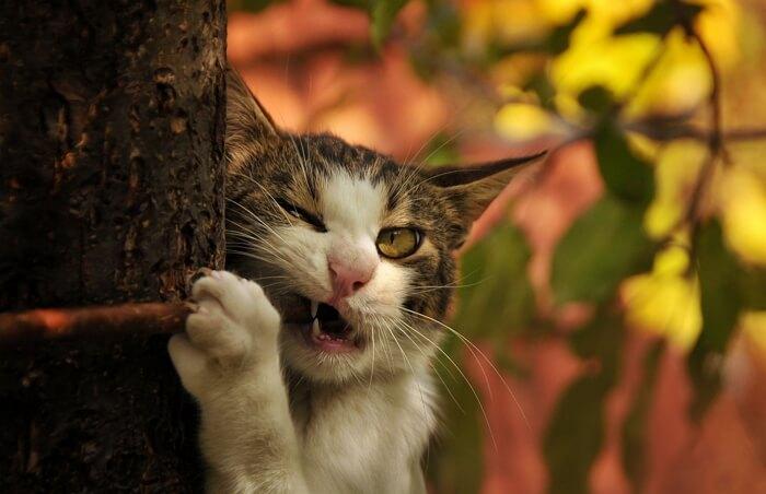 YouTube видео про кошек приколы до слез