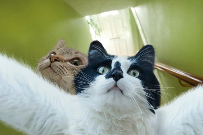 Ютуб приколы про котов и кошек видео
