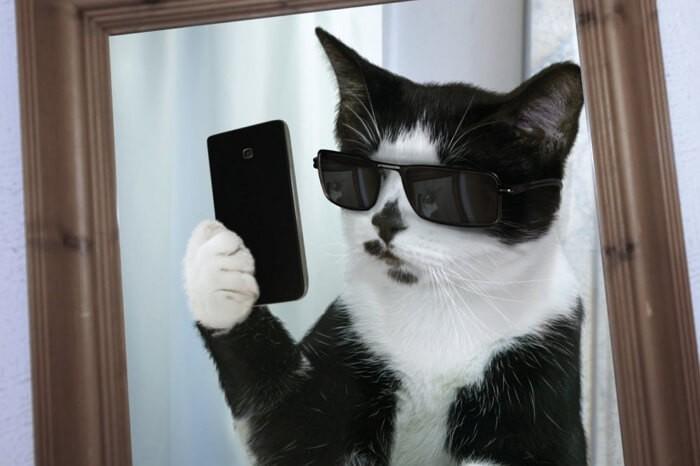 Ютуб приколы с кошками видео смотреть бесплатно