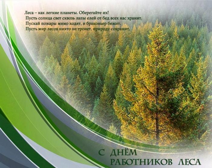 Красивые картинки День работников леса