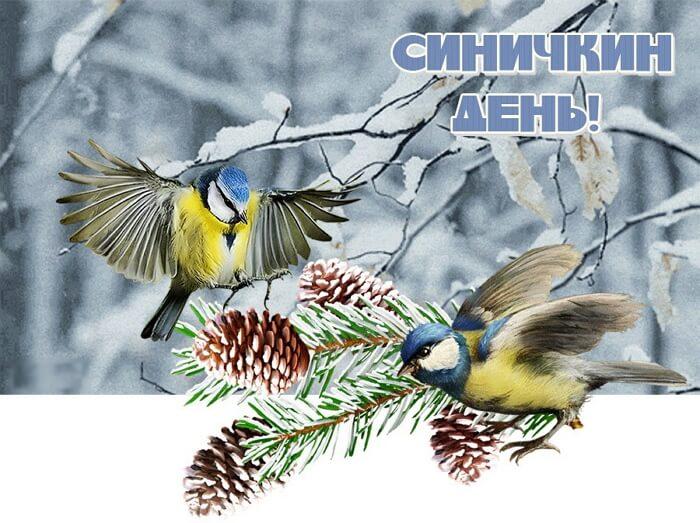 Красивые картинки Синичкин день