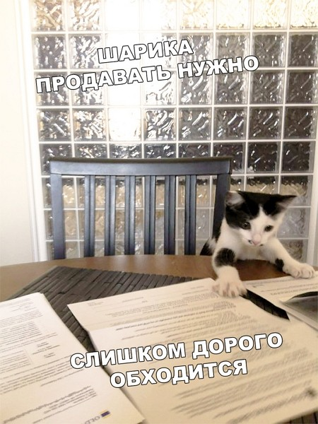 Фото приколы от 14.02.2020