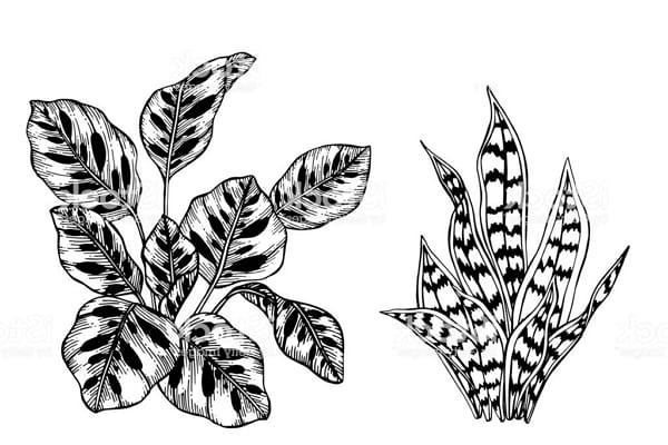 Рисунки для срисовки экзотических листьев