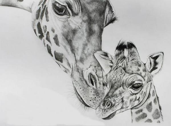 Рисунки для срисовки жираф