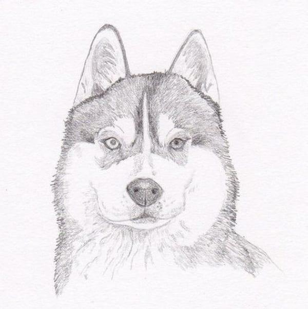 Рисунки лайки карандашом