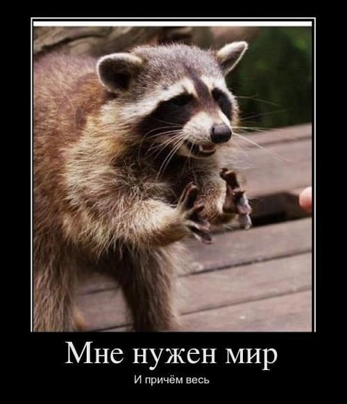 Демотиваторы про животных