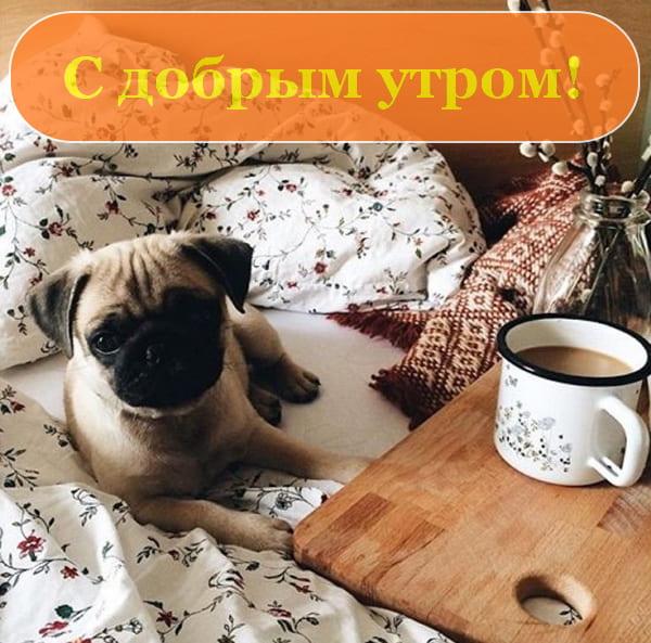 Доброе утро фото приколы