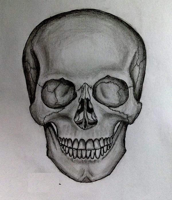 Рисунки черепа карандашом для начинающих